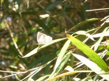ウラギン秋型♀-4